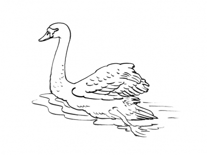 Coloriage cygne 10 coloriage cygnes coloriage animaux - Coloriage cygne ...