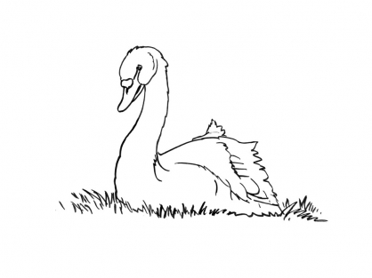 Coloriage Cygne 13