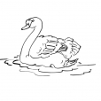 Coloriage Cygne 14