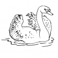 Coloriage Cygne 3