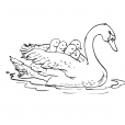 Coloriage Cygne 7