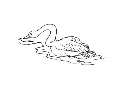 Coloriage Cygne 8
