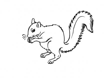 Coloriage ecureuil 3 coloriage ecureuils coloriage animaux - Coloriage d ecureuil ...