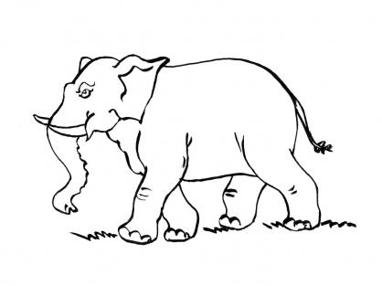 Coloriage Eléphant 10