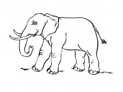 Coloriage Eléphant 11
