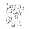 Coloriage Eléphant 14