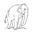 Coloriage Eléphant 7