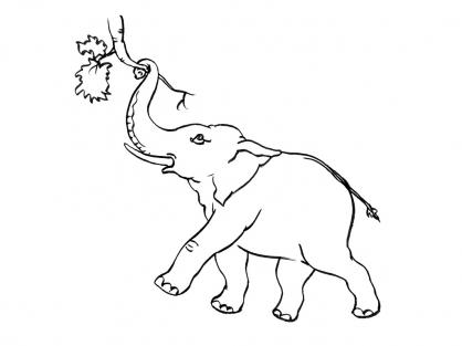 Coloriage Eléphant 9