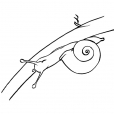 Coloriage Escargot 12