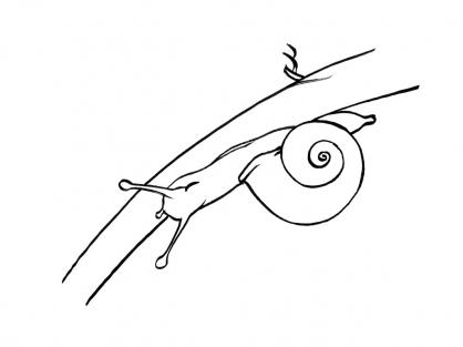 Coloriage Escargot 12