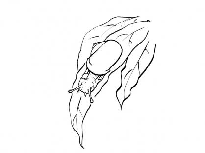 Coloriage Escargot 13