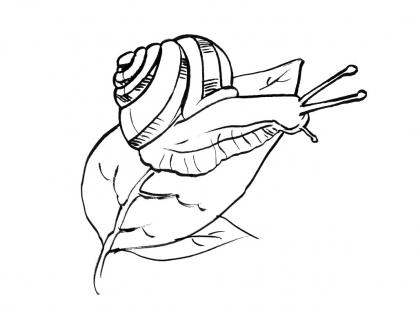 Coloriage Escargot 16