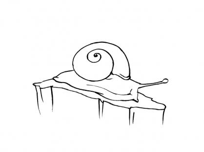 Coloriage Escargot 2