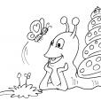 Coloriage Escargot 29
