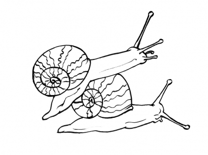 Coloriage Escargot 4