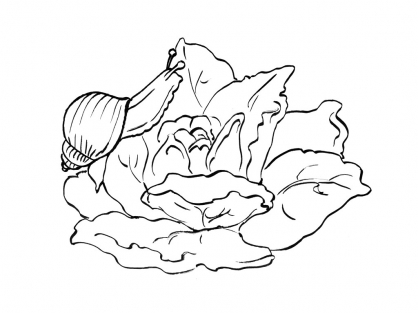 Coloriage escargot 5 coloriage escargots coloriage animaux - Coloriages escargot ...