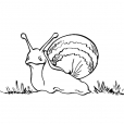 Coloriage Escargot 6