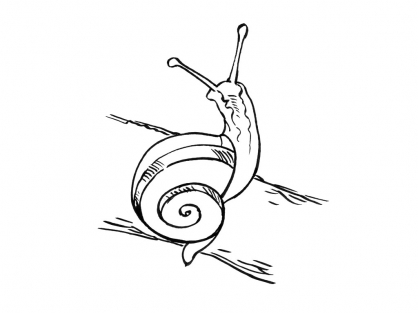Coloriage Escargot 7