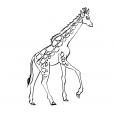 Coloriage Girafe 11
