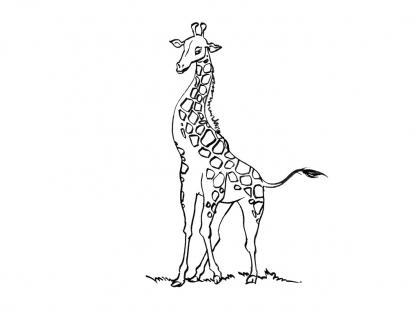 Coloriage Girafe 13