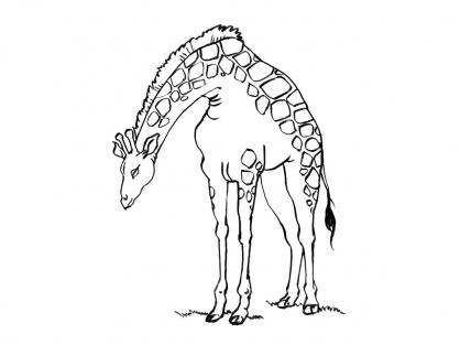 Coloriage Girafe 14
