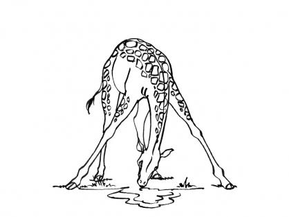 Coloriage Girafe 4