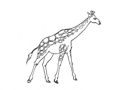 Coloriage Girafe 5