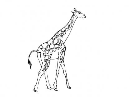 Coloriage Girafe 6