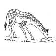 Coloriage Girafe 9