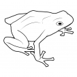 Coloriage Grenouille 11