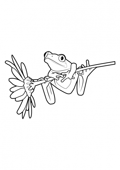 Coloriage Grenouille 2