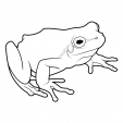 Coloriage Grenouille 4