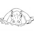 Coloriage Hippopotame 1