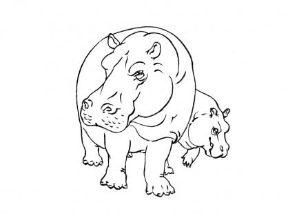 Coloriage Hippopotame 10