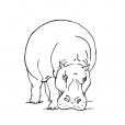 Coloriage Hippopotame 11