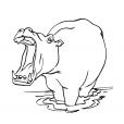 Coloriage Hippopotame 13