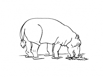 Coloriage Hippopotame 14