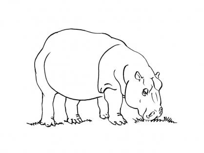Coloriage Hippopotame 15