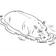 Coloriage Hippopotame 2