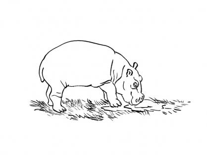 Coloriage Hippopotame 3