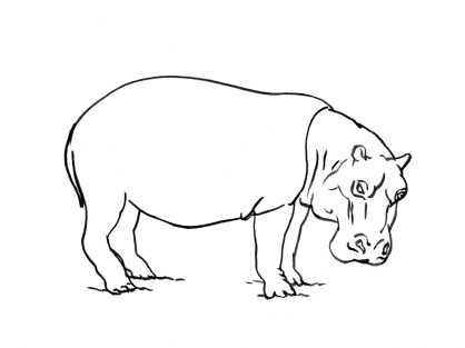 Coloriage Hippopotame 4