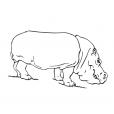 Coloriage Hippopotame 5