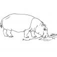 Coloriage Hippopotame 6