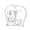 Coloriage Hippopotame 9