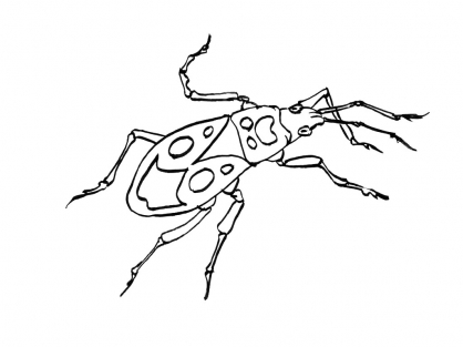 Coloriage Insecte 10