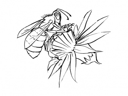 Coloriage Insecte 11