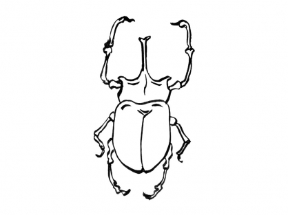Coloriage Insecte 12