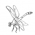 Coloriage Insecte 13