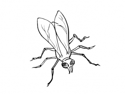 Coloriage Insecte 14