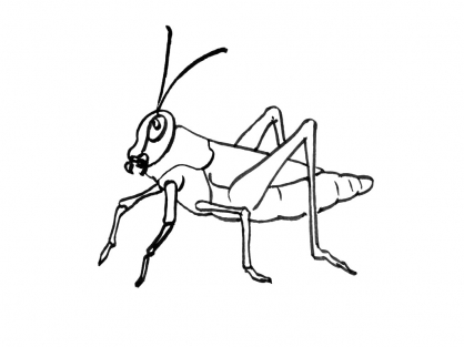 Coloriage Insecte 15